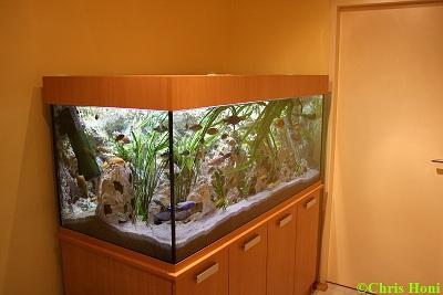 christoph honeder aquaristik. Black Bedroom Furniture Sets. Home Design Ideas